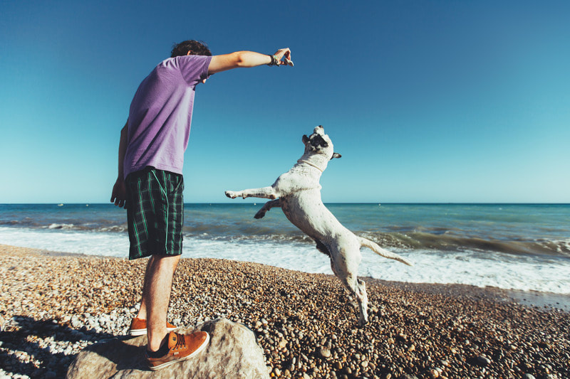 Trainer teaching dog to jump for treat at beach