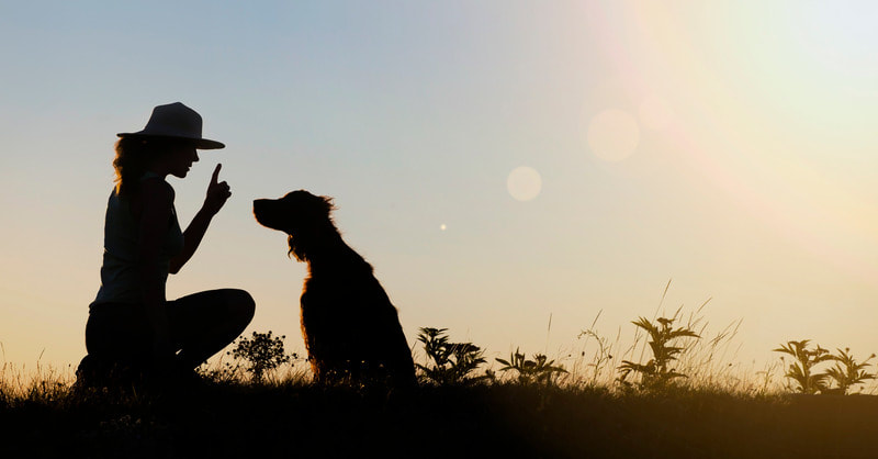 Silhouette of woman training dog to sit and stay